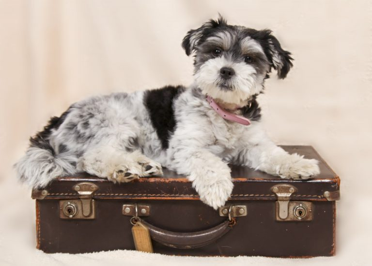 What Is A Puppy Pet Passport and How Do I Get One?