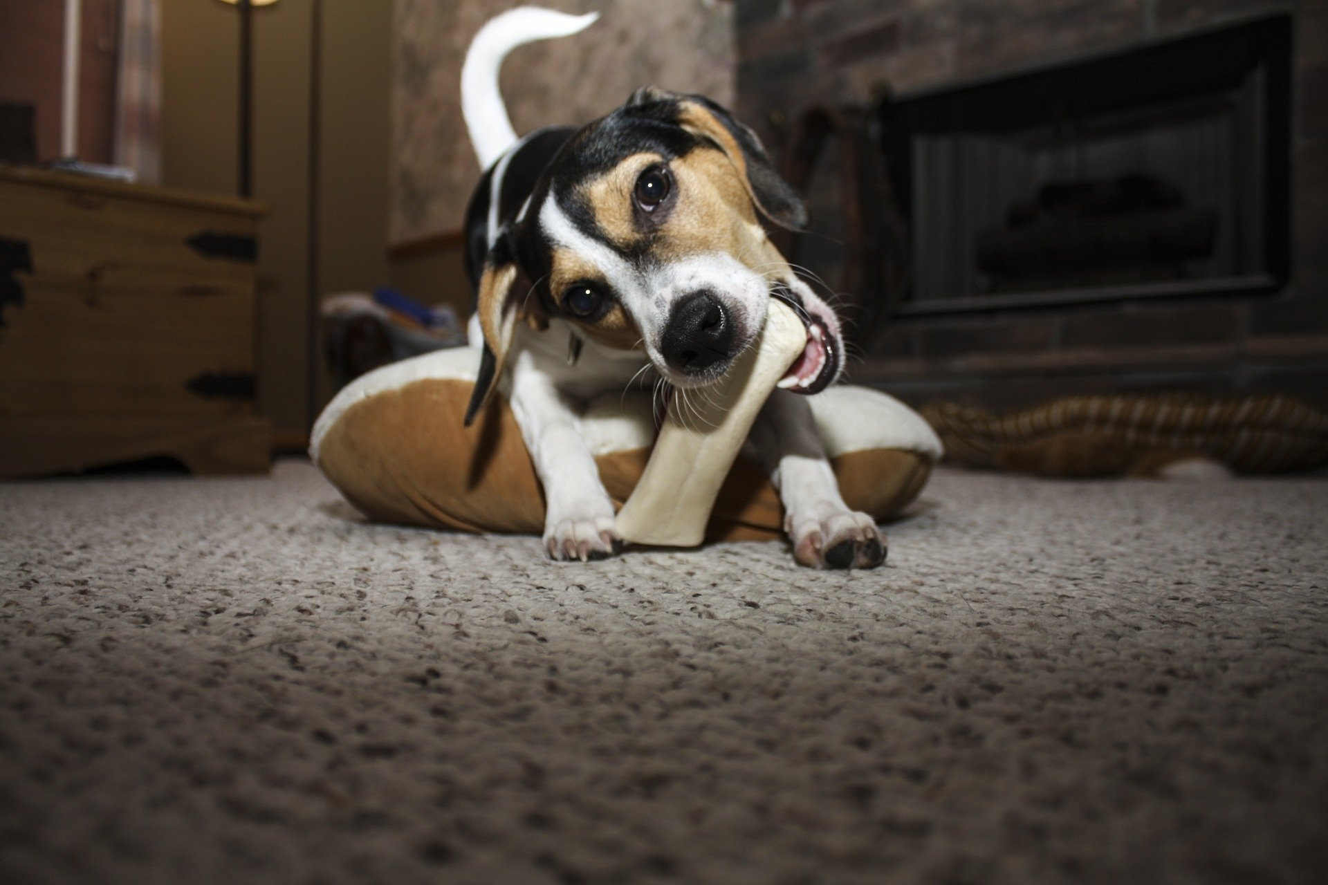 Puppy eating a bone - puppy food enrichment ideas featured image