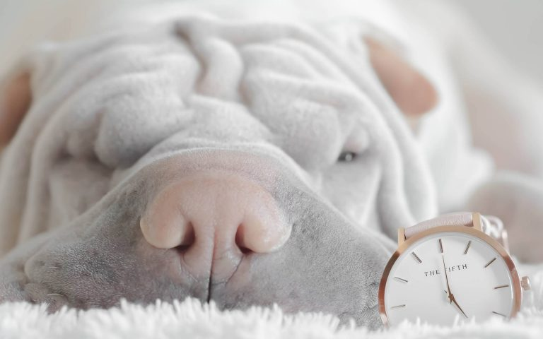 Creating the Perfect Puppy Feeding Schedule