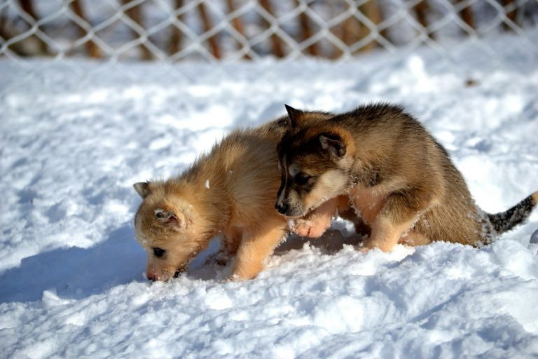 How To Take Care Of Your Puppy In The Winter