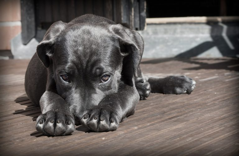 Dealing With Separation Anxiety in Puppies