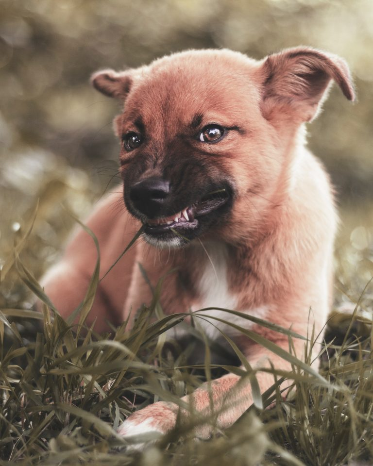 Puppy Resource Guarding: What To Do