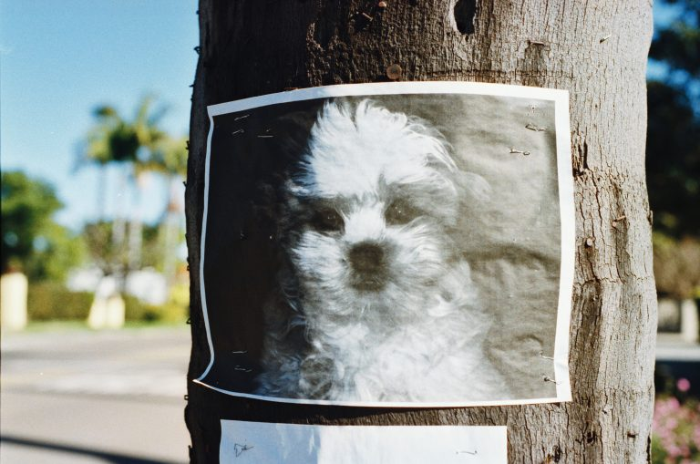 Tips on How to Find Your Lost Puppy