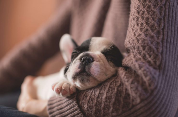3 Things You Should Do When You Get a New Puppy