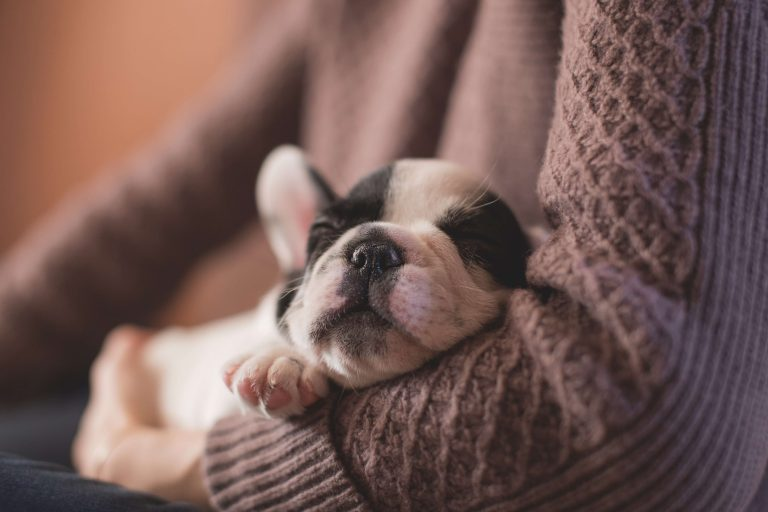 The First 3 Things You Should Do When You Get a New Puppy