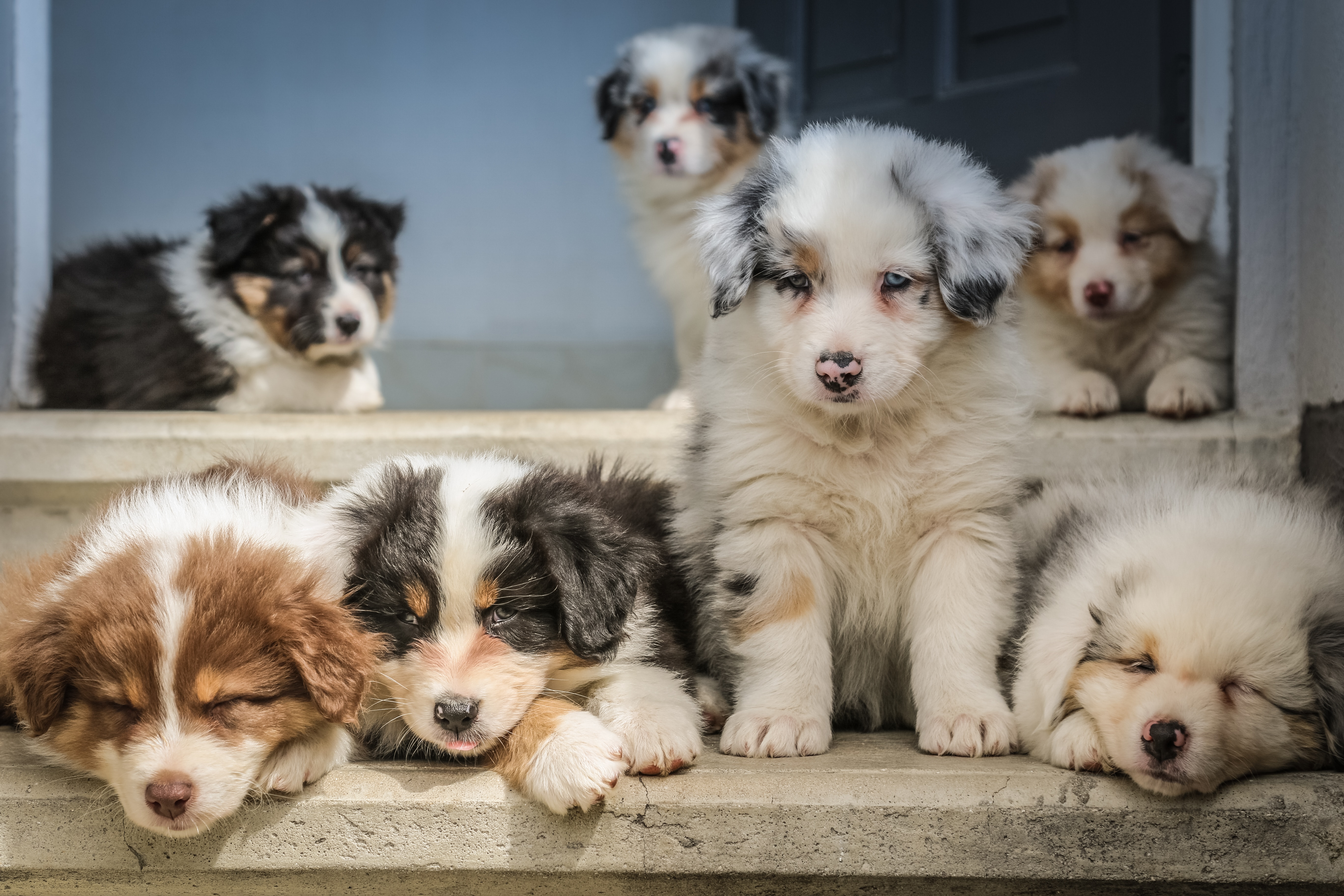 Introduce Your Puppy to Other Dogs