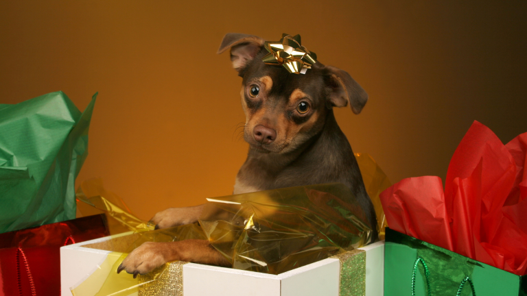 12 Perfect Gifts for a New Puppy Owner